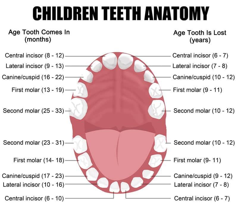Children Dental Services